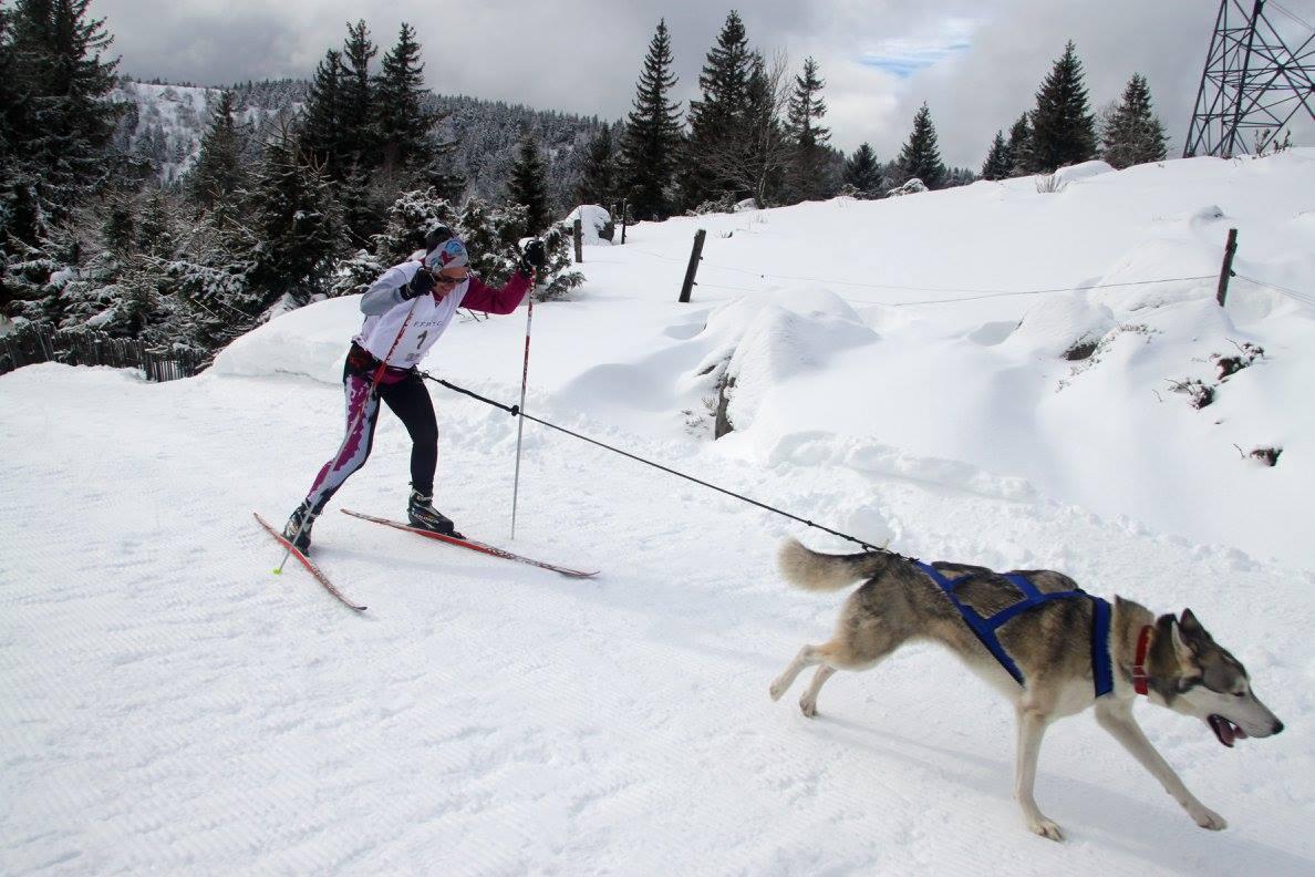 Je skie avec mon chien
