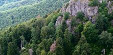 Nature reserve Forêt des Volcans et des Vogelsteine