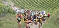 Marathon durch den Weinberg