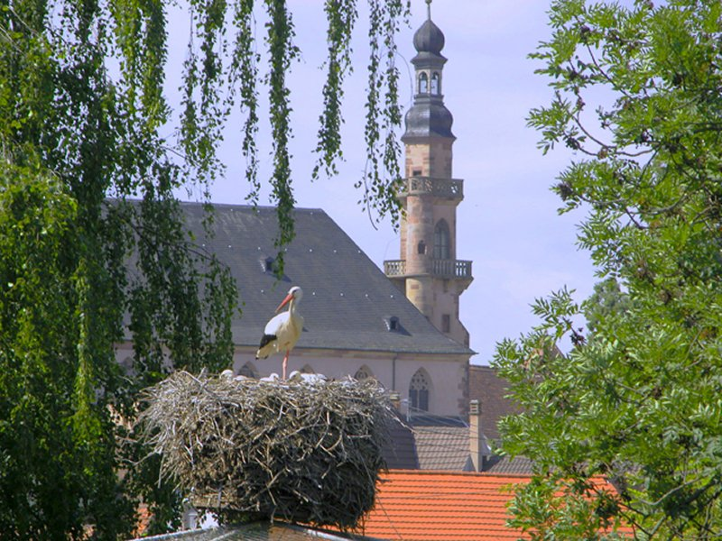 Eglise des J�suites
