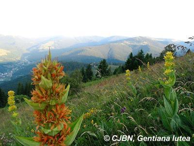 Jardin d 39 altitude du haut chitelet col de la schlucht - Jardin d altitude du haut chitelet ...