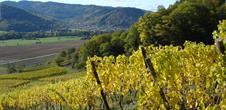 Sortie découverte: le vignoble, un écosystème en soi