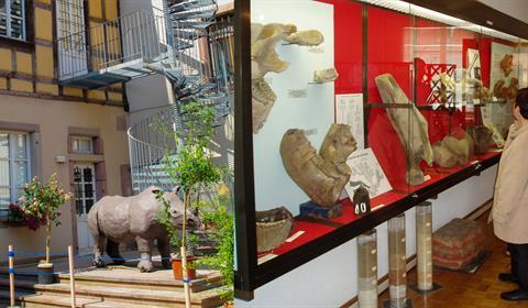 Ornithologie Musée d'histoire naturelle et d'ethnographie, Colmar, Alsace  www.museumcolmar.org Crédit photo : Ji-Elle (Wikicommons)