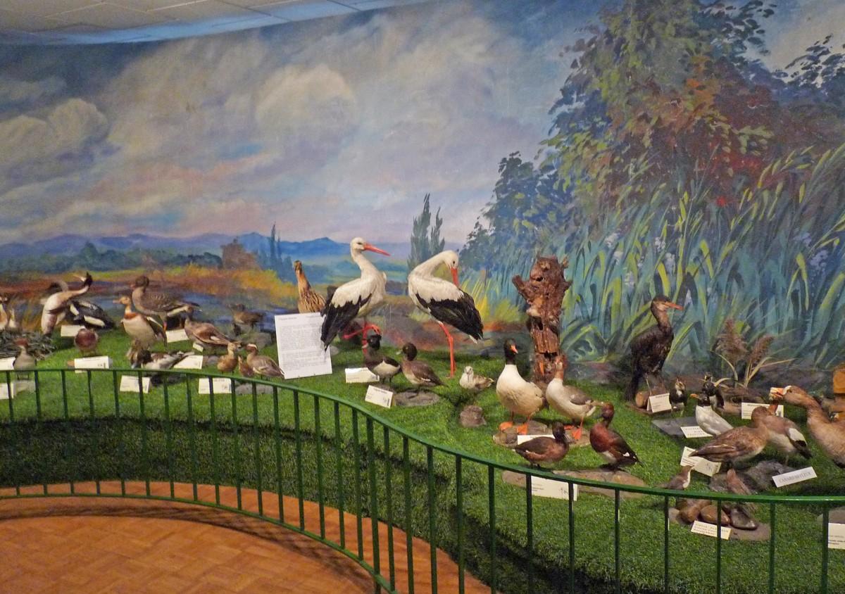 Vitrine sur l'Ethiopie Musée d'histoire naturelle et d'ethnographie, Colmar, Alsace  www.museumcolmar.org Crédit photo : Ji-Elle (Wikicommons)
