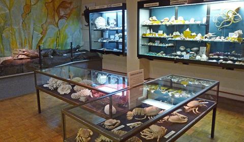 Invertébrés marins Musée d'histoire naturelle et d'ethnographie, Colmar, Alsace  www.museumcolmar.org Crédit photo : Ji-Elle (Wikicommons)