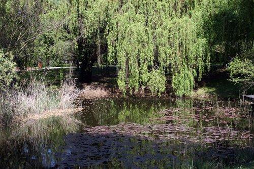 Jardin botanique de l 39 universit de strasbourg strasbourg - Jardin botanique de strasbourg ...