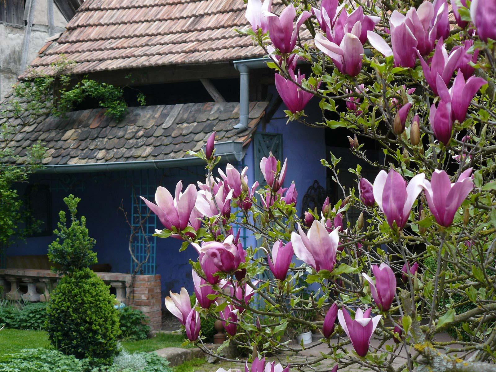 Parcs et jardins remarquables du bas rhin tourisme en for Au jardin de la nymphe bleue