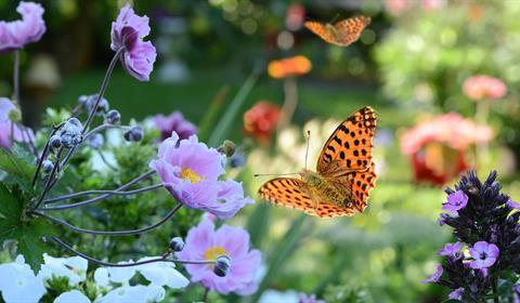 Lethosia Biblis des Philippines - crédit photo : jardin des papillons