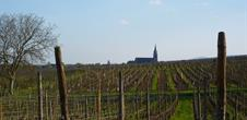 Wine trail of Bergheim
