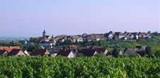 Grands Crus wine trail - Zellenberg