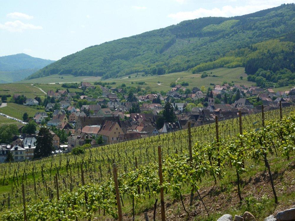 Vue sur Riquewihr - Crédit photo : Office de Tourisme du Pays de Ribeauvillé et Riquewihr