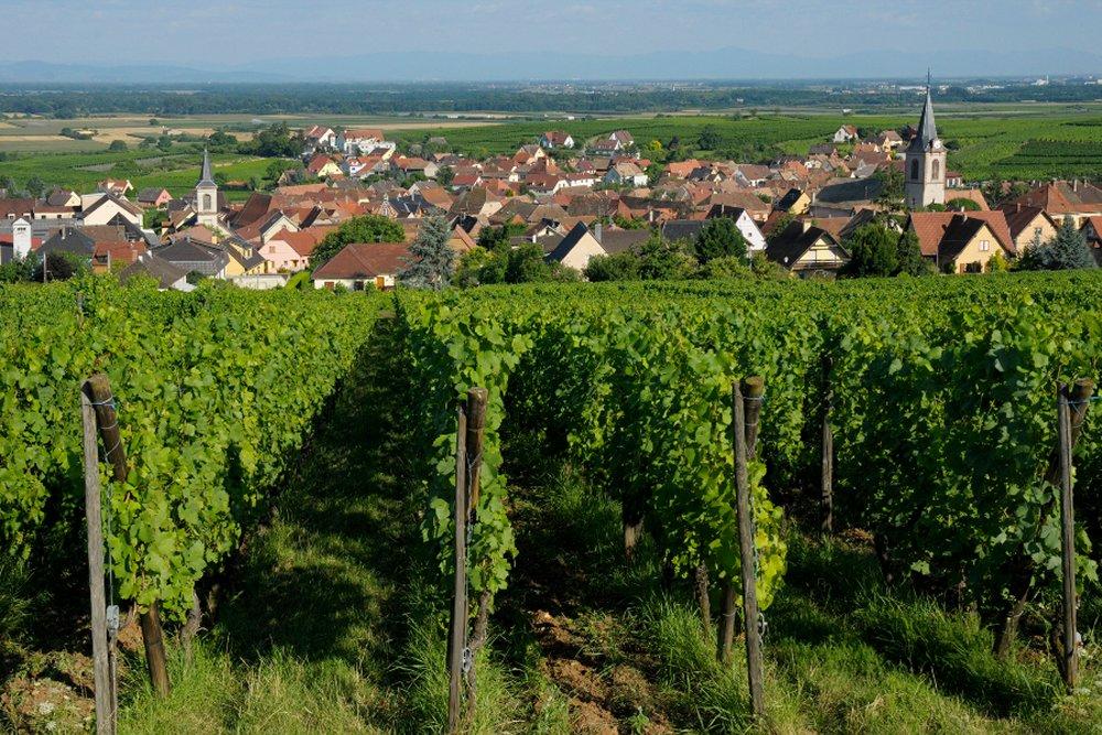 Sentier d'interpr�tation 'La viticulture moderne'