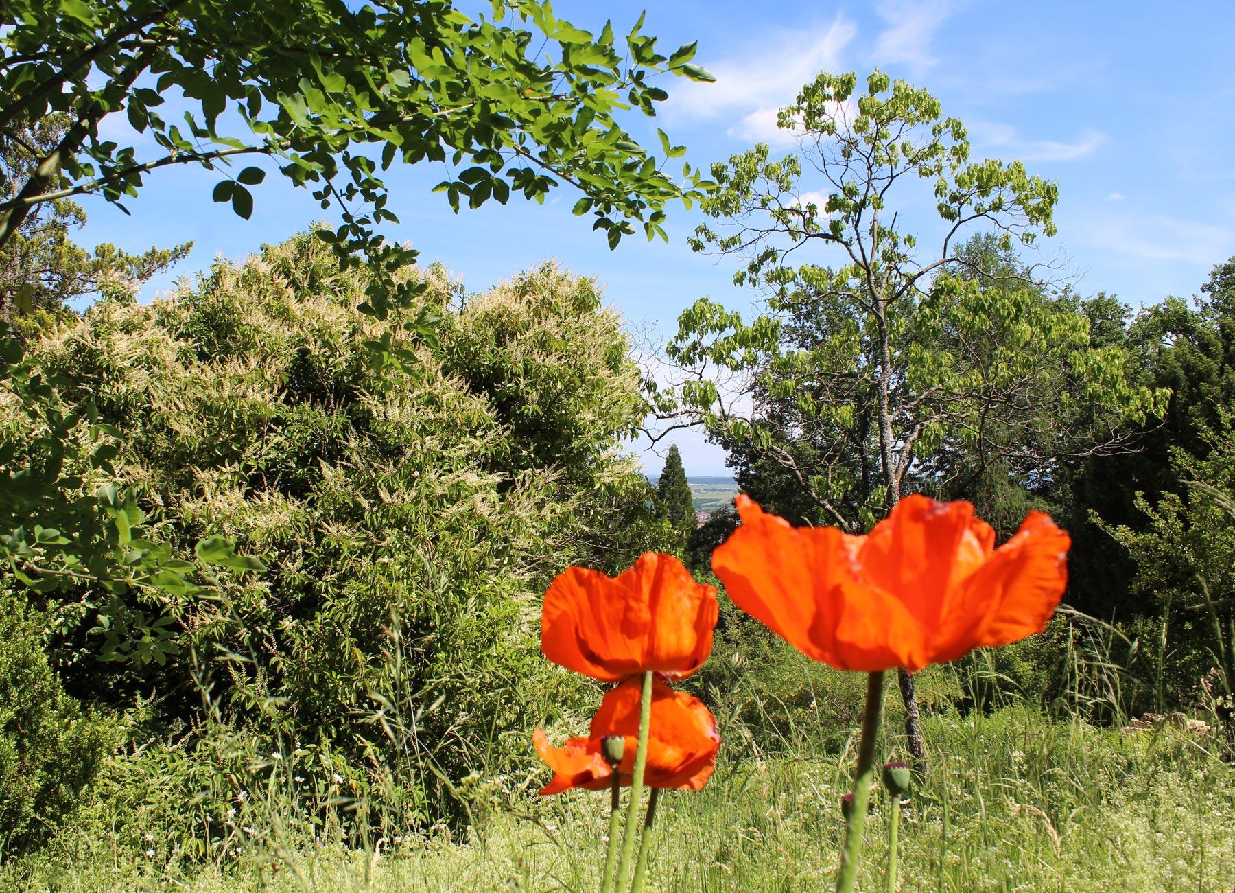 Office de tourisme du pays de saverne jardin botanique for Jardin anglais allemagne