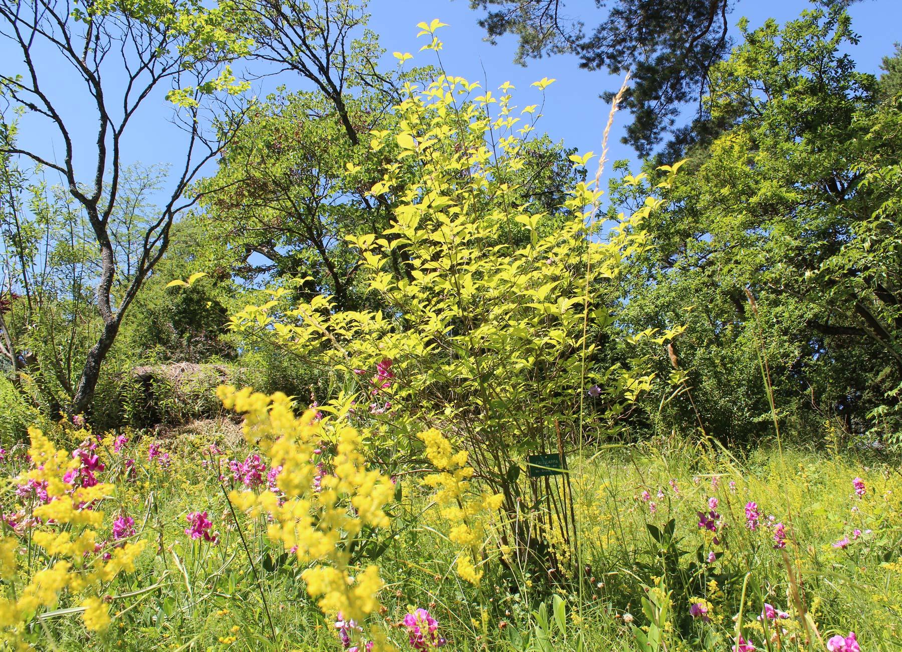 Office de tourisme du pays de saverne jardin botanique - Jardin botanique de saverne ...