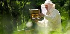 Apiculture - Découvrir le monde fascinant des abeilles