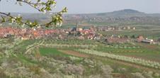 Sentier découverte et viticole de Westhoffen