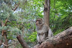 Exhibition : primates