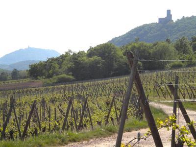 Sentier de l'Ortenbourg et du Ramstein - depuis la chapelle du Taennelkreuz