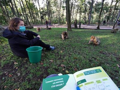 Visite privée - petit déjeuner avec les singes