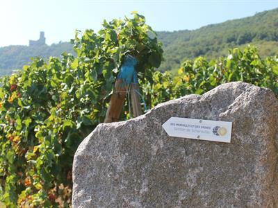 Sentier des Murailles et des Vignes - Scherwiller