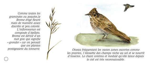 © CPEI des Hautes Vosges