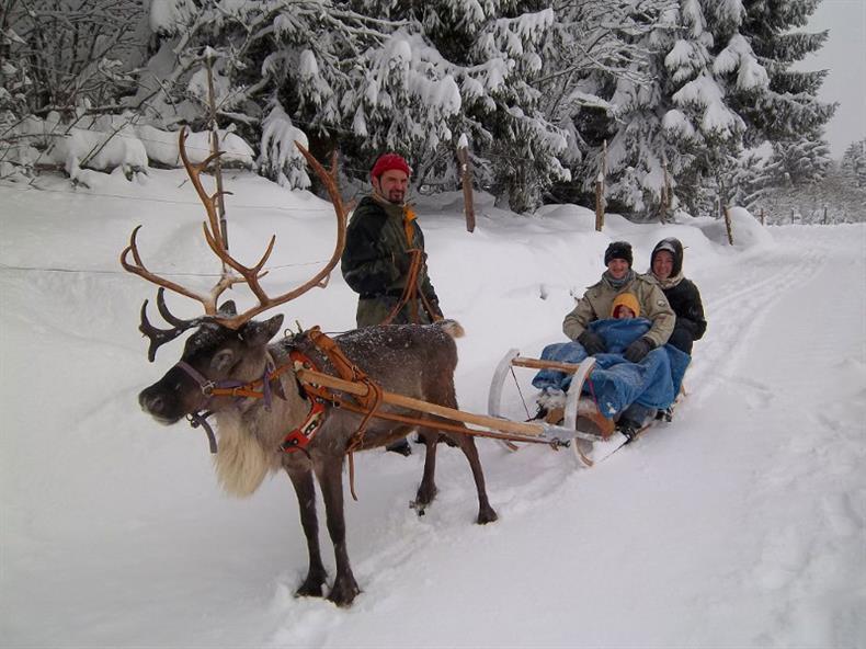 traineau tracté par un renne