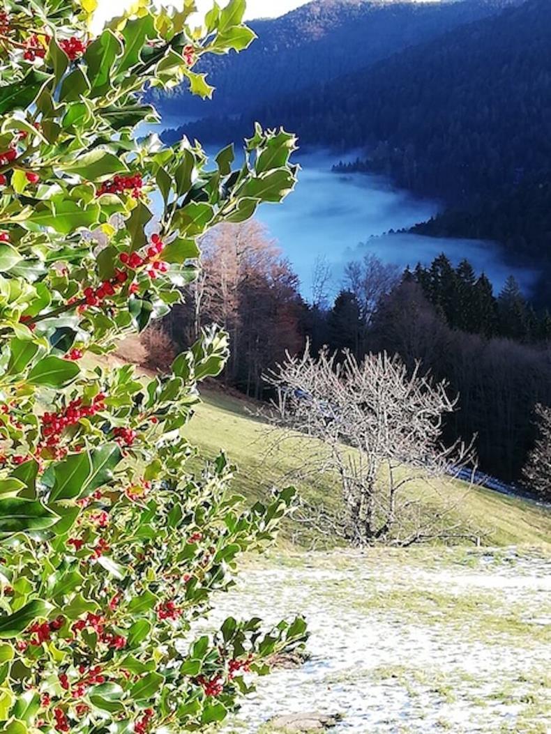http://apps.tourisme-alsace.info/photos/kaysersberg/photos/ferme-auberge-le-bonhomme-graine-johe-paysage.jpg