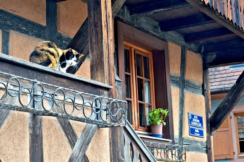 apps.tourisme-alsace.info/photos/kaysersberg/photos/balade_ludique_kaysersberg_6.JPG