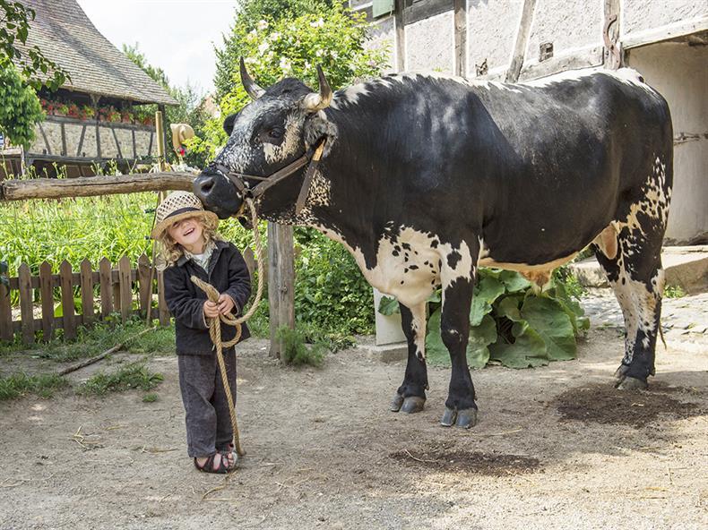 Enfant et bovin©La Focale de Soultz.JPG