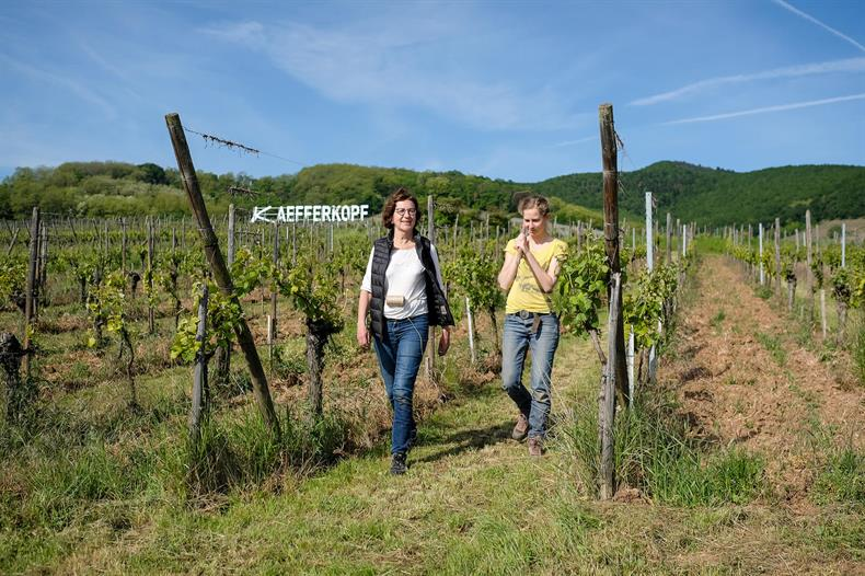 Domaine GRISS Maurice