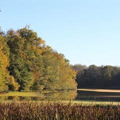 - © Sentier des Fosses de Chavannes sur l'étang