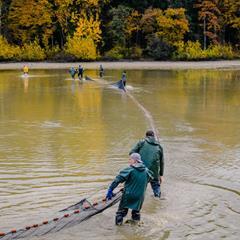 November, the month of pond fishing - © Pisciculture Kohler