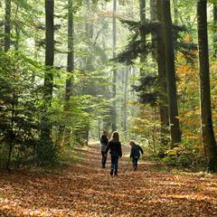 Forêt du Jura Alsacien - © Vianney MULLER