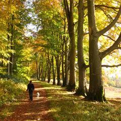 En automne - © Crédit Photo: Vianney Muller