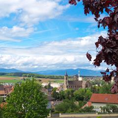 Vue depuis le Roggenberg - © Vianney MULLER