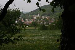 Naturschutzgebiet von Tagolsheim – Semberg