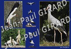 Carte postale Cigogne