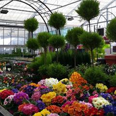 Plantes saisonnières - © Crédit photo : Office de Tourisme du Sundgau