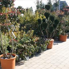 Les arbustes d'ornement - © Crédit photo : Office de Tourisme du Sundgau