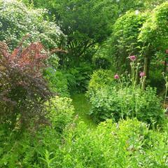 Le Jardin de Brigitte - © lejardindebrigitte.blogspot.com