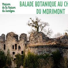 BALADE BOTANIQUE AUTOUR DES RUINES DU MORIMONT – GROUPE 1 - © MNS