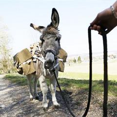 - © L'âne Pepito de la ferme du Luppachhof