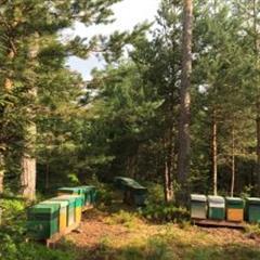 Les ruchers - © Crédit photo : lesruchersdusundgau.fr