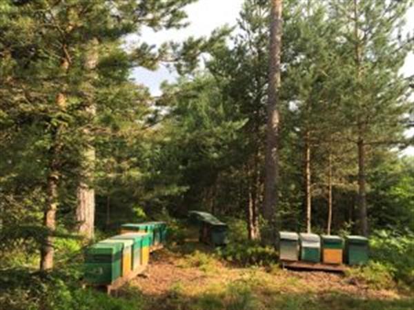Les ruchers