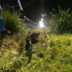 - © Étang de pêche de Moernach