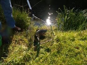 Étang de pêche de Moernach