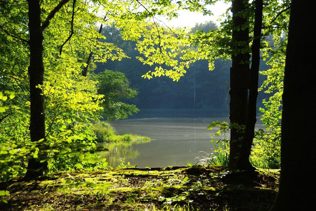 L'étang du Lutterholtz de Manspach