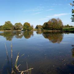 Pond of Friesen © Vianney-MULLER.