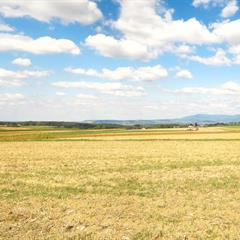 Agricultural landscape on the heights of Hagenthal © Vianney-MULLER.