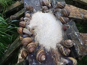 Escargots de Margaux